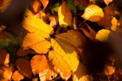 Herbstinspirationen